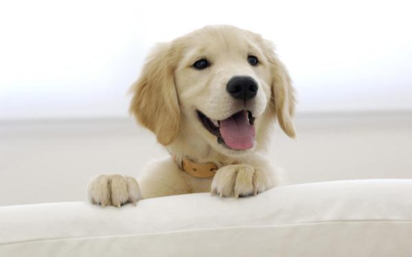 为什么说狗狗小的时候是狗狗训练的最佳时期